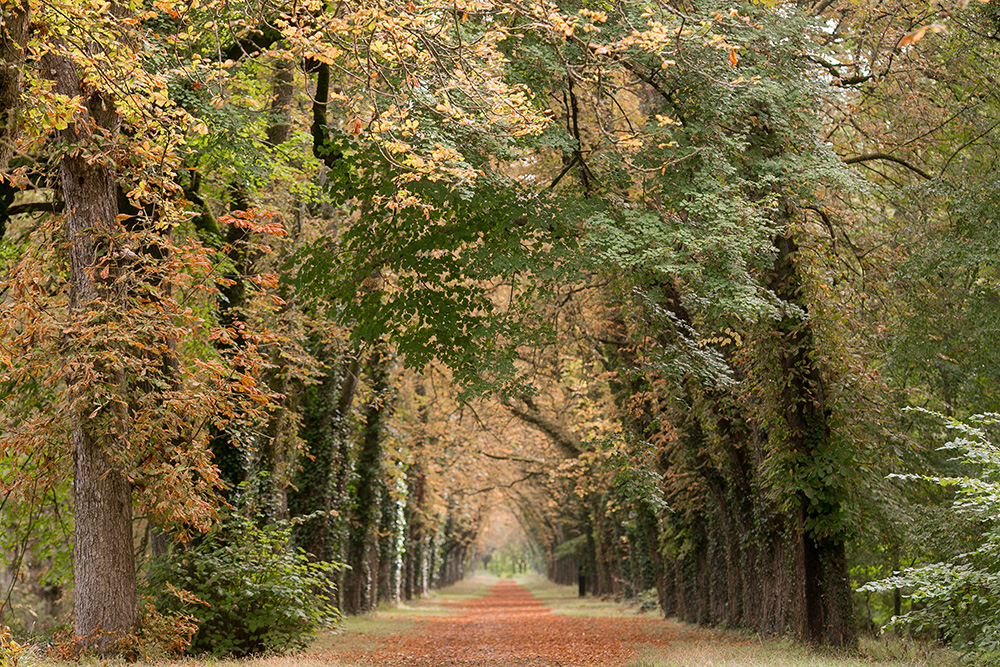 loire valley fall colors pathway in trees